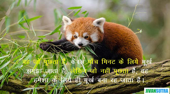 Funny Story in Hindi on Wisdom of Monkeys