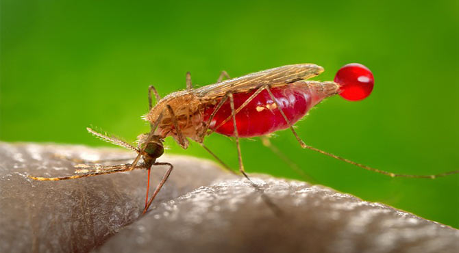Malaria Symptoms in Hindi