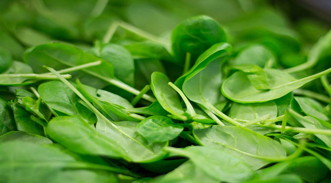 Wonderful Health Benefits of Spinach in Hindi