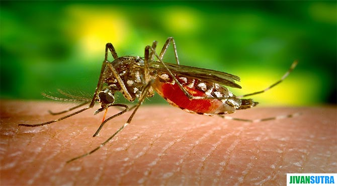 Symptoms and Treatment of Dengue Fever in Hindi